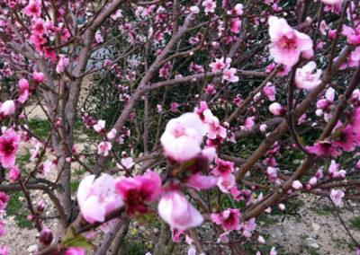blossom2wb15